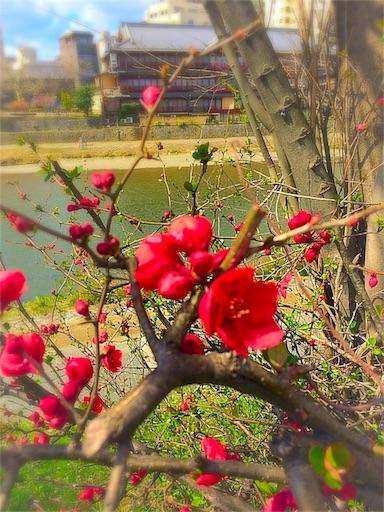 f:id:hariruri:20160315222838j:image
