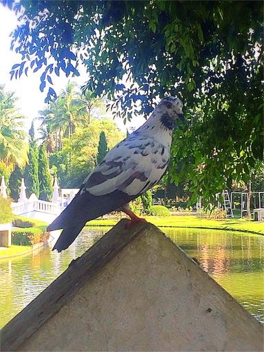 f:id:hariruri:20161213154555j:image