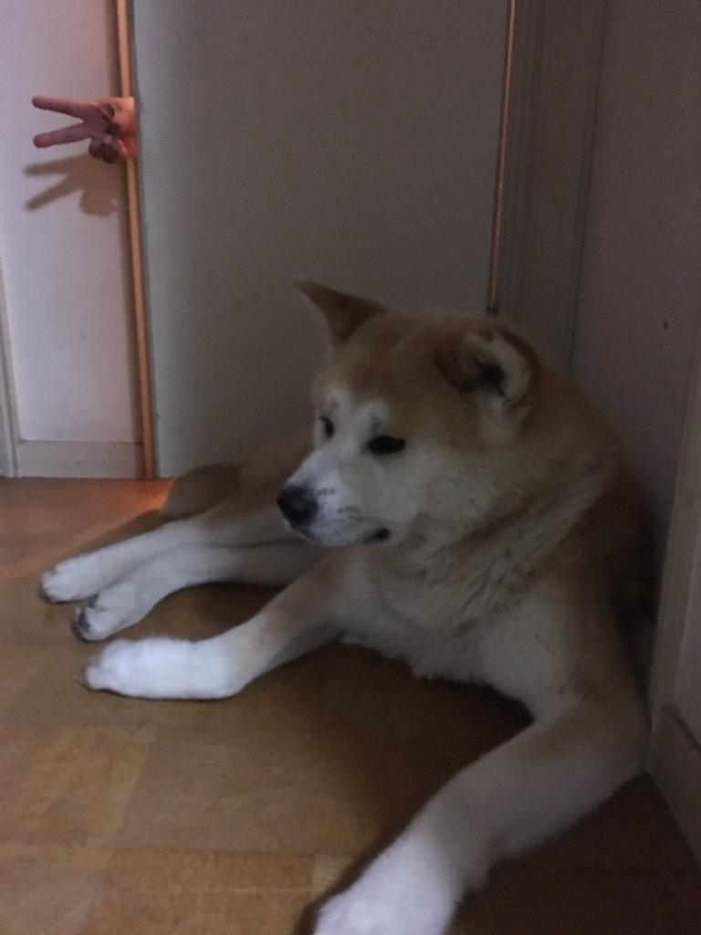 f:id:haro33takoshi:20170612222802j:plain