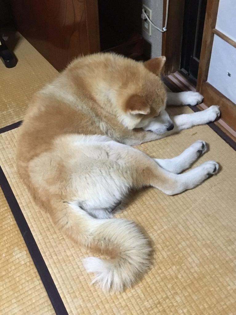 f:id:haro33takoshi:20170618223036j:plain