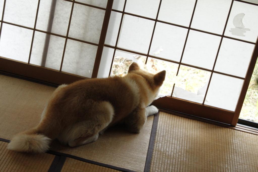 f:id:haro33takoshi:20170623212622j:plain