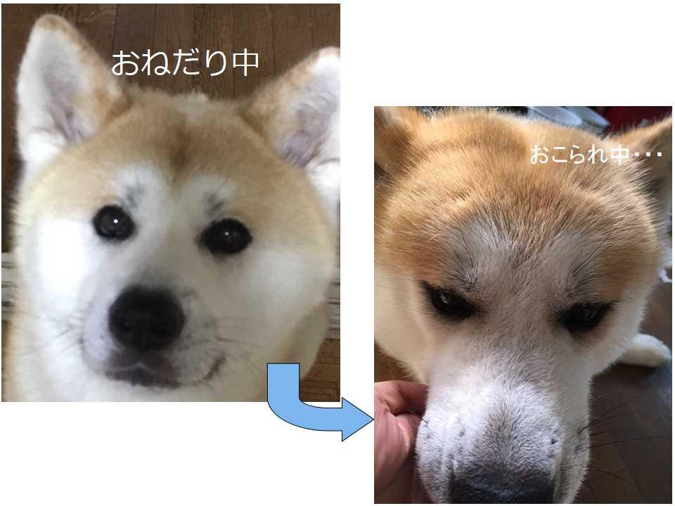 f:id:haro33takoshi:20170719225315j:plain
