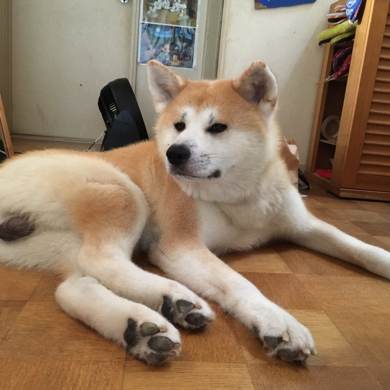 f:id:haro33takoshi:20170820171450j:plain