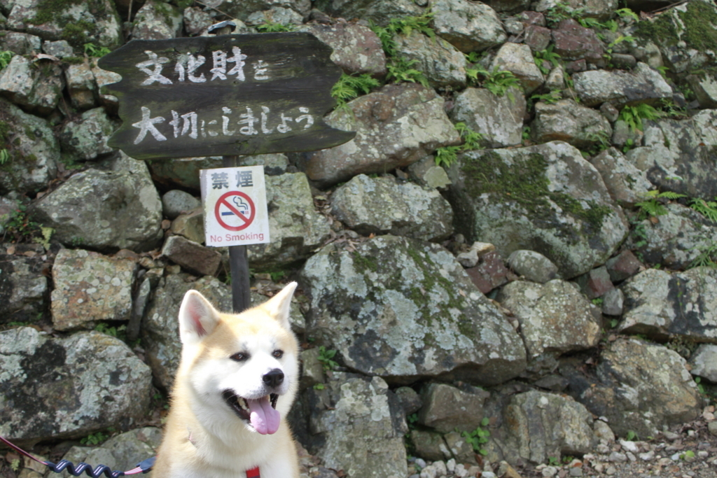 f:id:haro33takoshi:20171001224120j:plain
