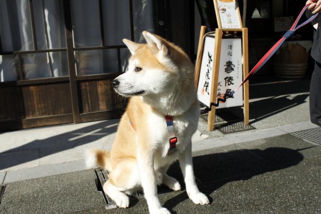 f:id:haro33takoshi:20171116171502j:plain