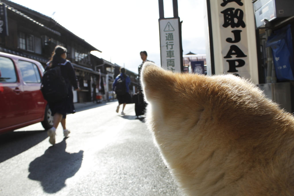f:id:haro33takoshi:20171116172121j:plain