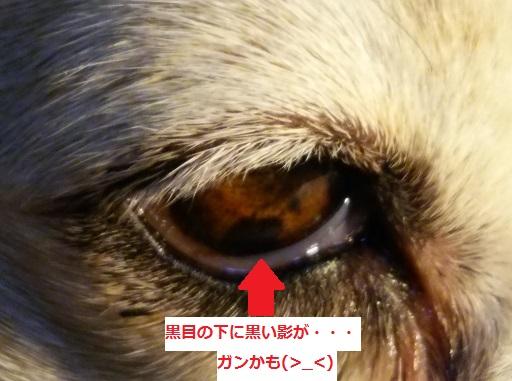 f:id:haru-natu-aki-fuyu:20180324231259j:plain