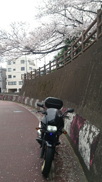 f:id:haru-to-bIke:20200329151053j:image