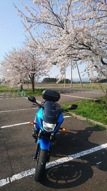 f:id:haru-to-bIke:20200415135225j:image