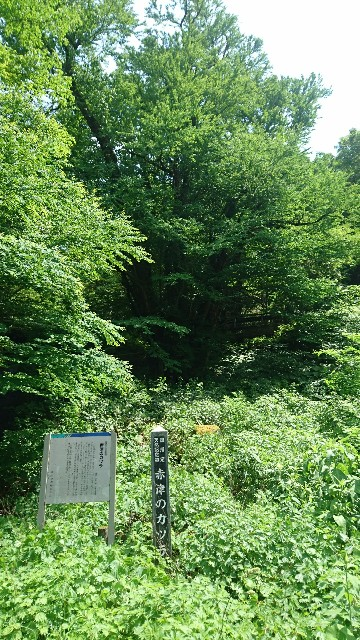 f:id:haru-to-bIke:20200618132520j:image