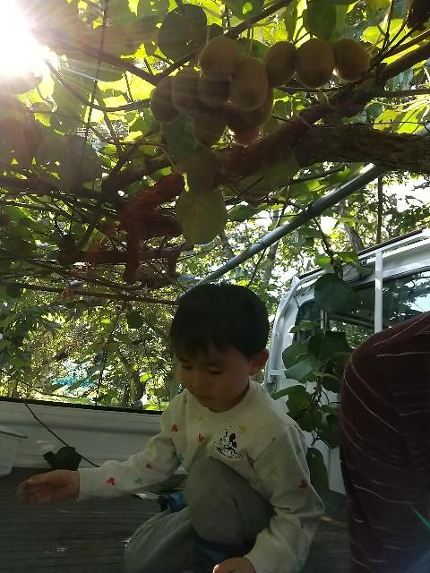 f:id:haru-to-bIke:20201105203116j:image