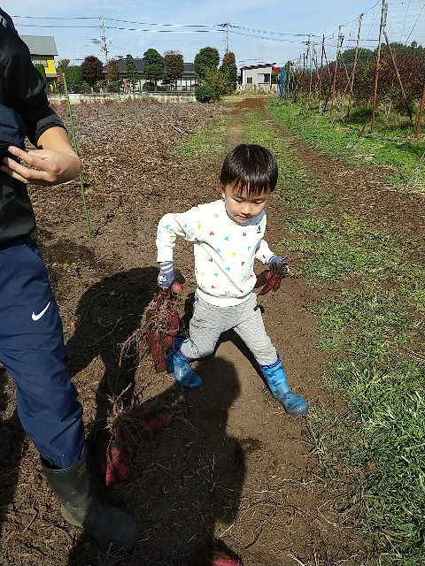f:id:haru-to-bIke:20201105204855j:image
