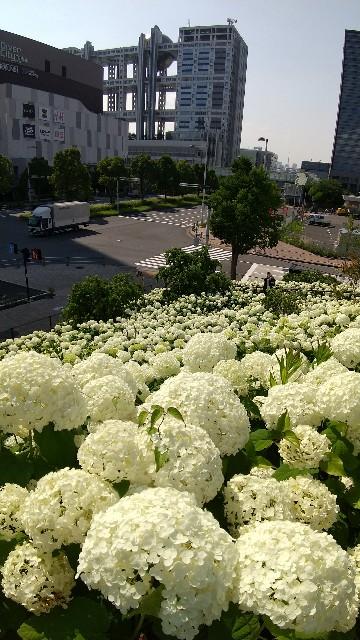 f:id:haru-to-bIke:20210618142123j:image