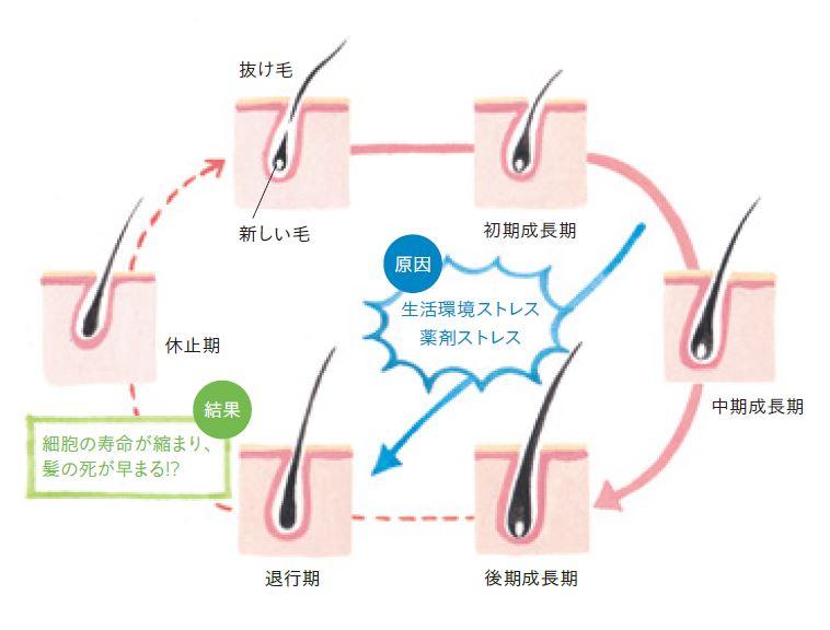 f:id:haru27ru:20190322154011j:plain