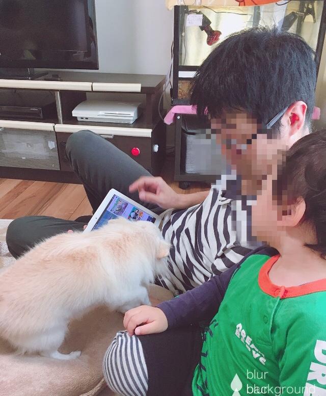 f:id:haru501227:20180915001656j:plain