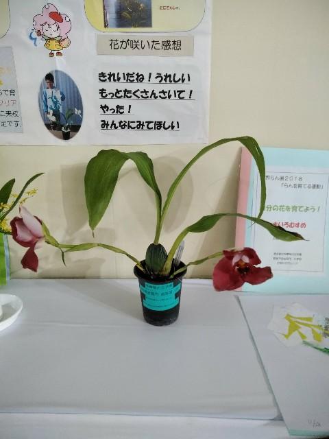 f:id:haru5200:20180217141308j:image