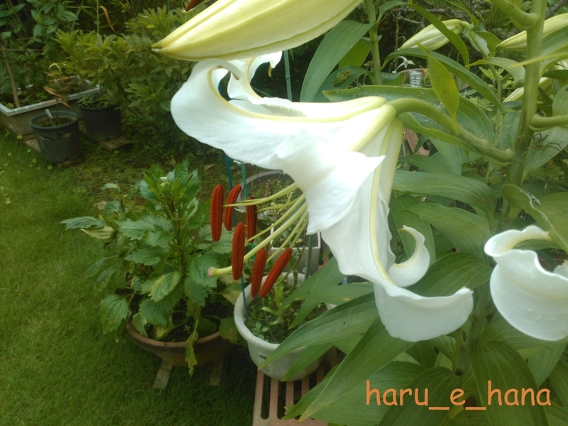 f:id:haru_e-hana:20210718161259j:plain