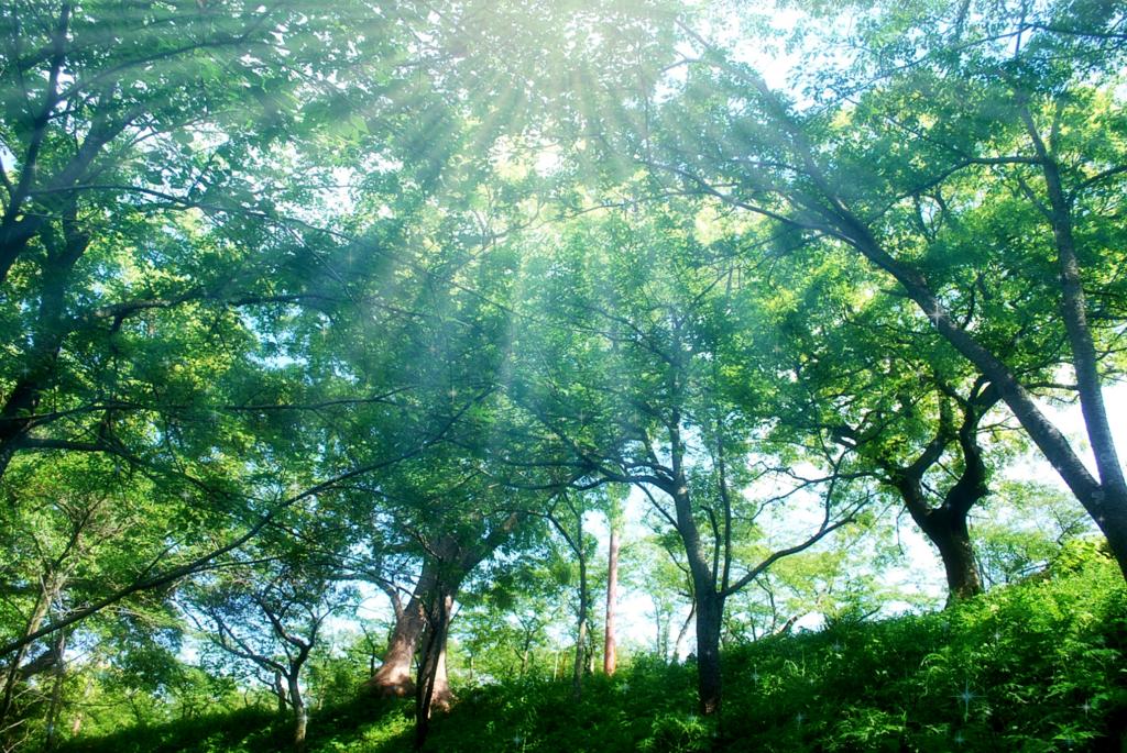 森林浴を行うこともアトピーを治していくためには大切