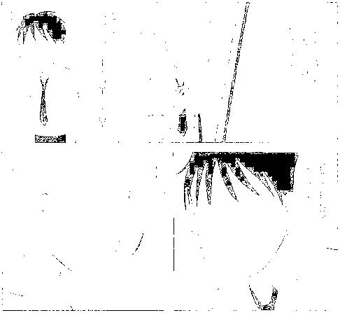 f:id:harubara:20150112231521p:plain