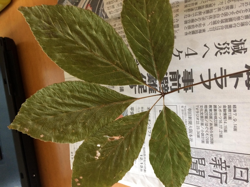f:id:haruchin-puripuri:20170930094545j:plain