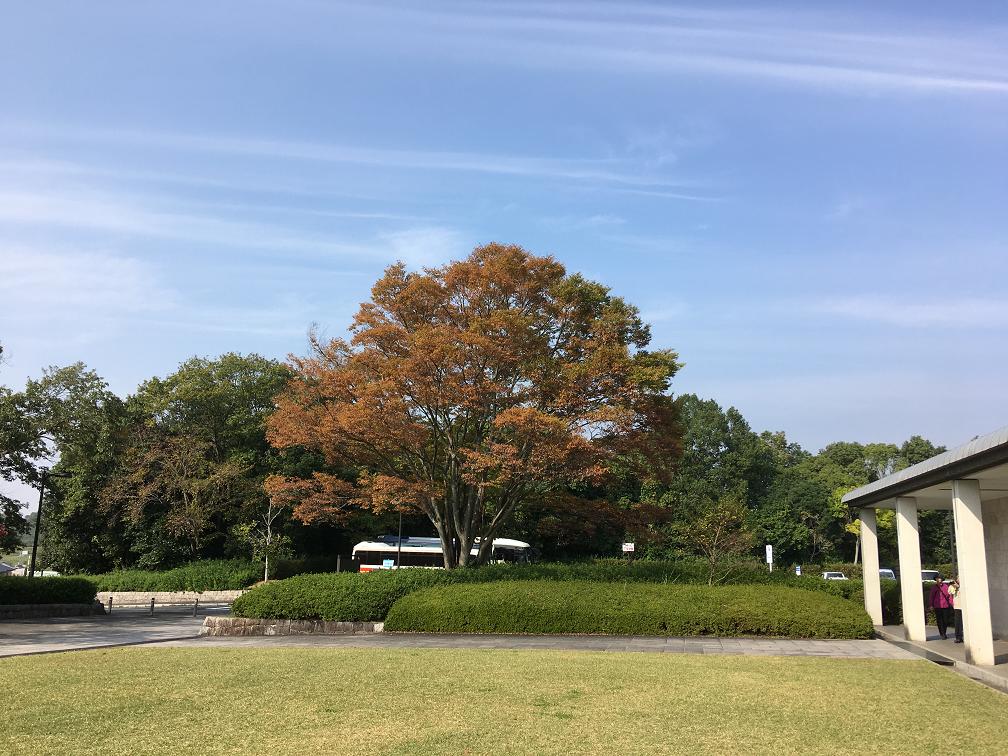 f:id:haruchin-puripuri:20191031235309p:plain