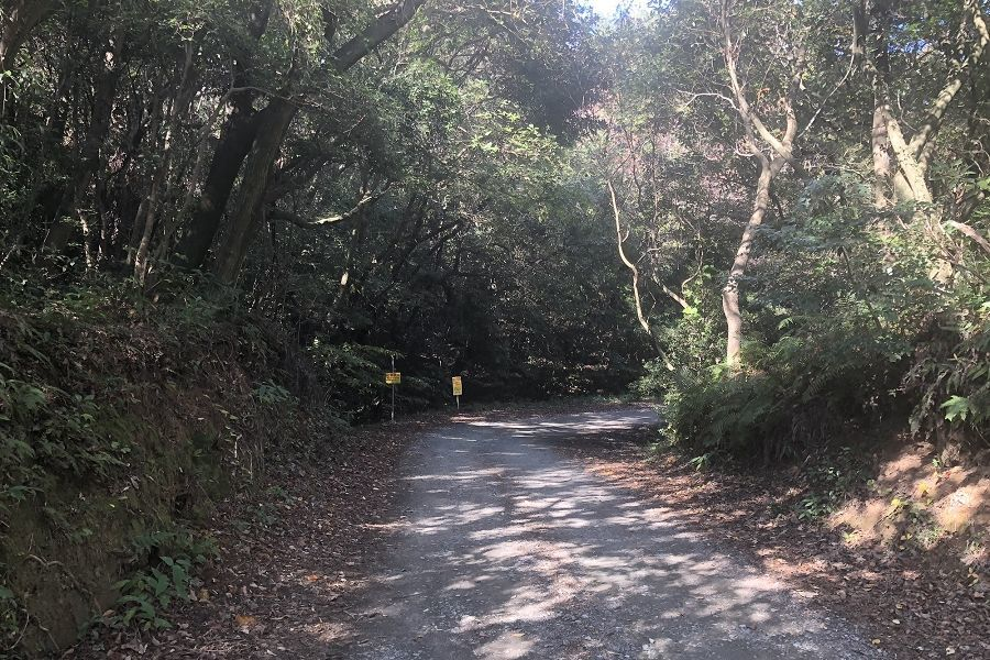 篠栗九大の森