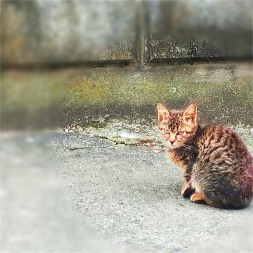 f:id:haruka-sato-chf:20151213174835j:image:w300