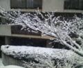 名古屋・覚王山・雪