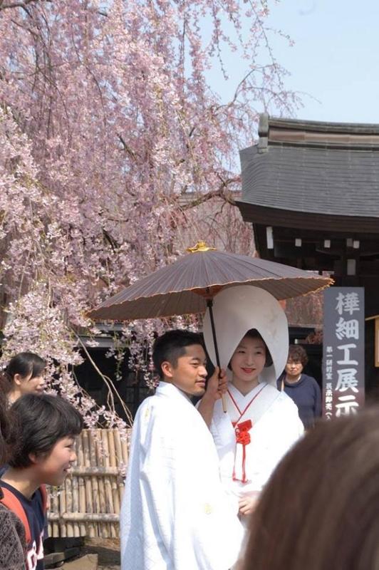 角館・桜の下の結婚式