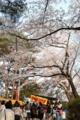 秋田・千秋公園・桜