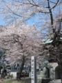 釜石・石応禅寺・桜