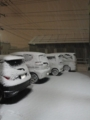 旭川・積雪