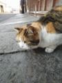 臼杵のネコ