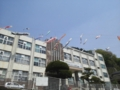 釜石市役所・鯉のぼり