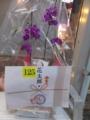 さんろく感謝の日 抽選賞品 蘭の花