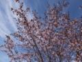 170514雄武・桜公園