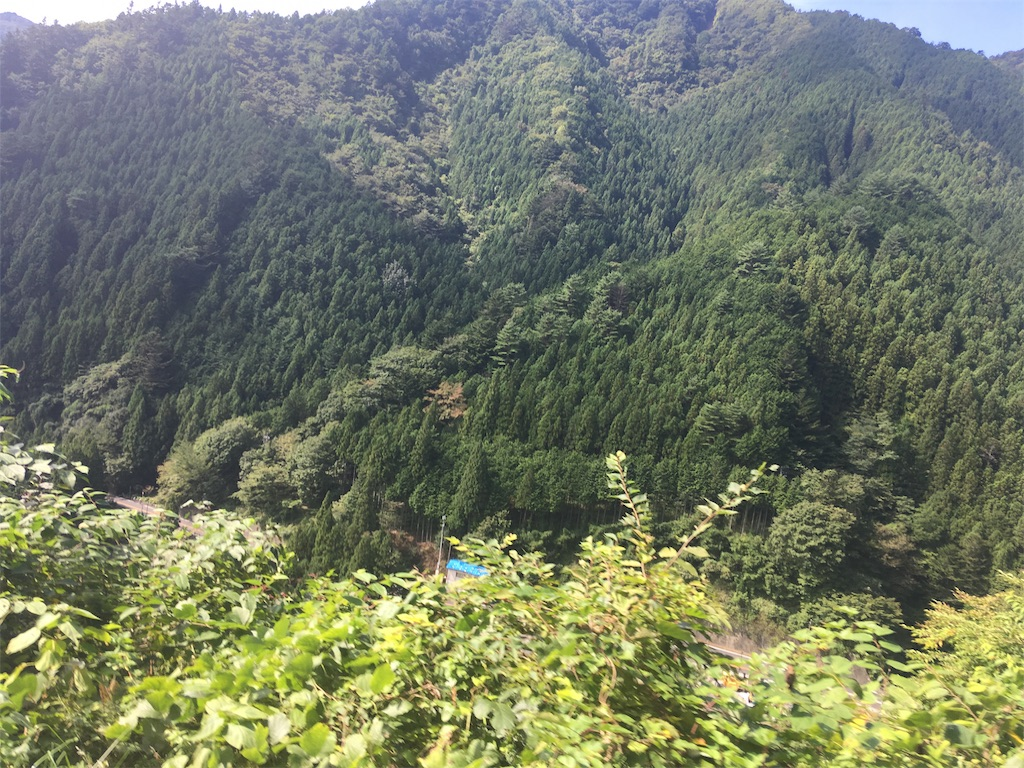 都民の森風景