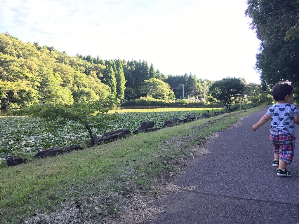 f:id:haruki_mattari:20180701214413j:image