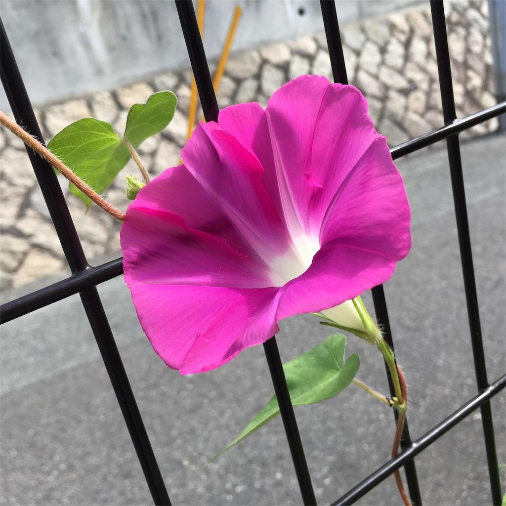 f:id:harukoyama:20170711091716j:image
