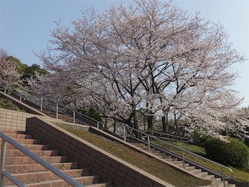 f:id:harukoyama:20180330162951j:image