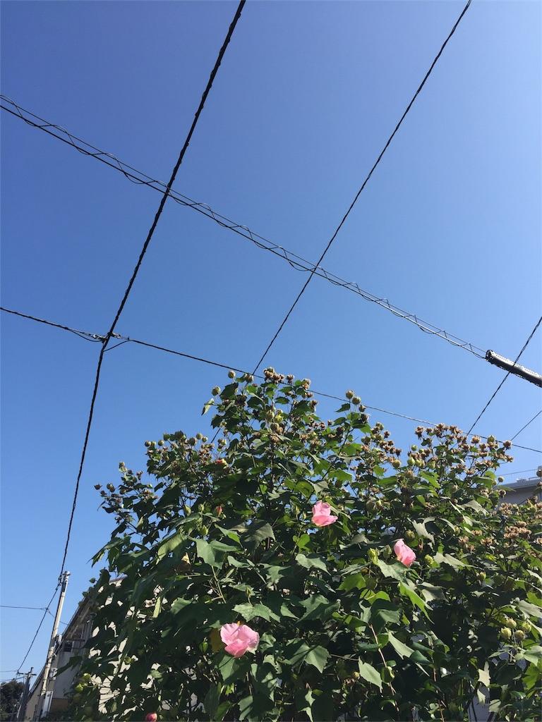 f:id:haruna333:20161026190939j:image