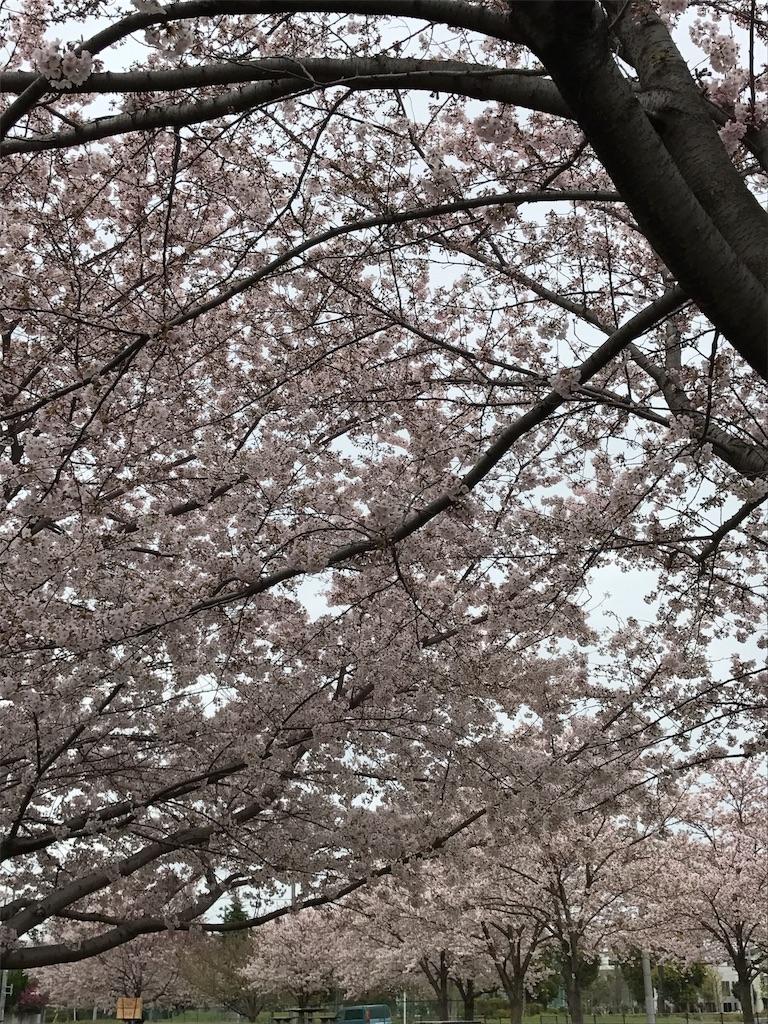 f:id:haruna333:20170408075000j:image