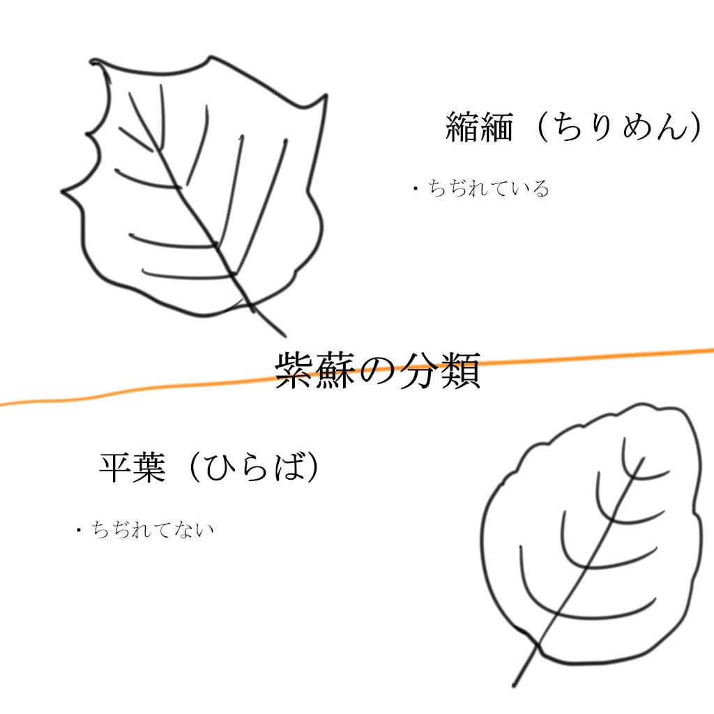 f:id:harunohihuyunohi:20190803164836j:plain