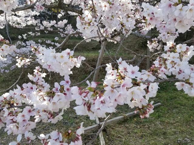 f:id:harupeiyou:20190401184704j:image
