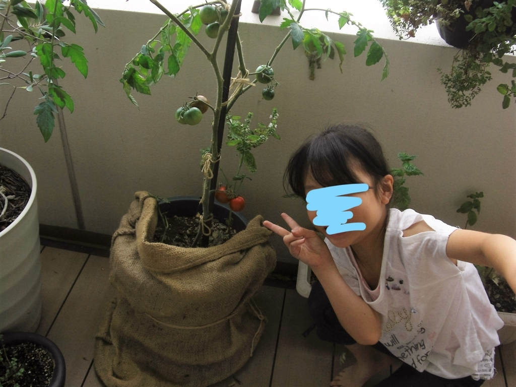 f:id:haruru1019:20170622181334j:plain