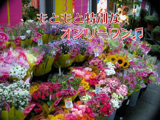 f:id:haruusagi_kyo:20170116071953j:plain