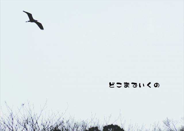 f:id:haruusagi_kyo:20170506085939j:plain