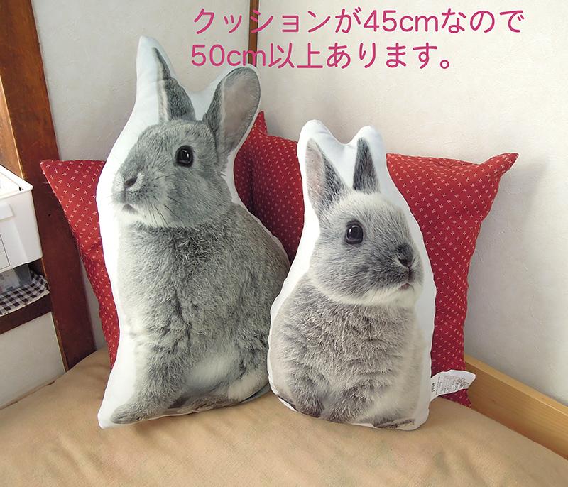 f:id:haruusagi_kyo:20181125181820j:plain