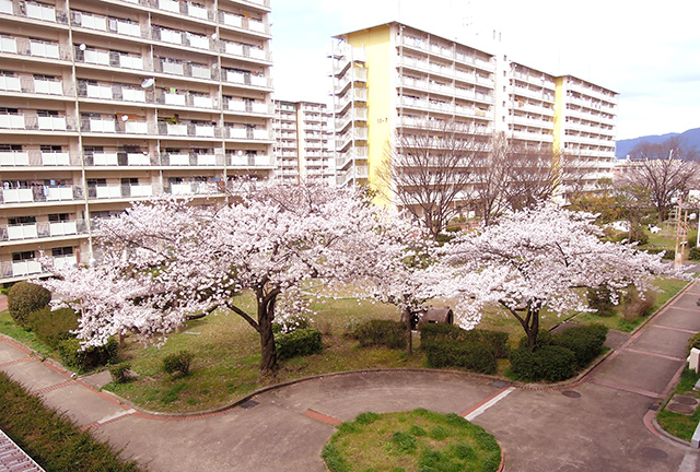 f:id:haruusagi_kyo:20200330073823j:plain