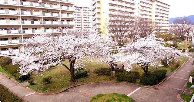 f:id:haruusagi_kyo:20200330073901j:plain